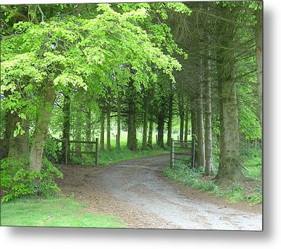 Metal Print featuring the photograph Road Into The Woods by Charles and Melisa Morrison