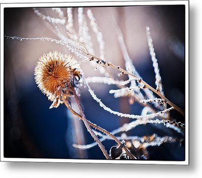 Road Side Plant Metal Print by Lisa  Spencer