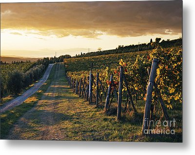 Road Through Vineyard Metal Print by Jeremy Woodhouse