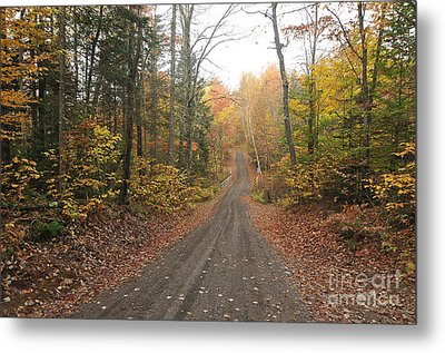 Roads Less Traveled Metal Print by Catherine Reusch Daley