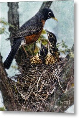 Robin And Babies In Nest Metal Print by Jill Battaglia