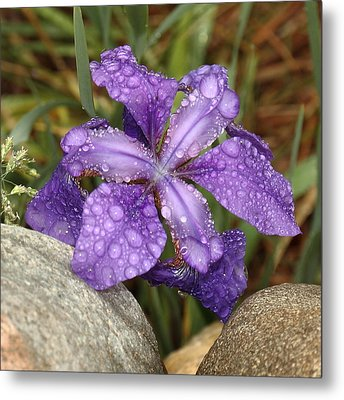 Metal Print featuring the photograph Rock Iris by Coby Cooper