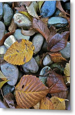 Metal Print featuring the photograph Rocks And Leaves by Bill Owen