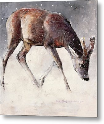 Roe Buck - Winter Metal Print by Mark Adlington