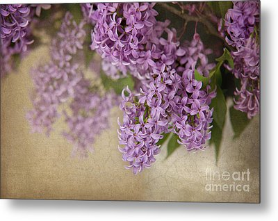 Romantic Lilac Metal Print