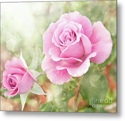 Romantic Roses In Pink Metal Print