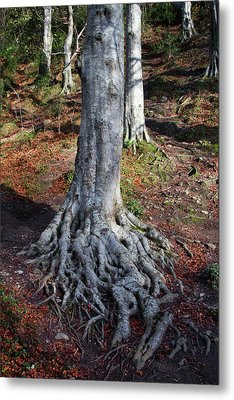 Rooted To The Spot Metal Print