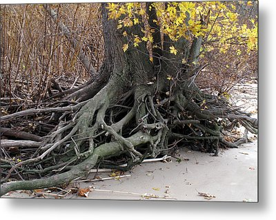 Metal Print featuring the photograph Roots 002 by Dorin Adrian Berbier