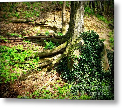 Roots Metal Print by Maria Scarfone