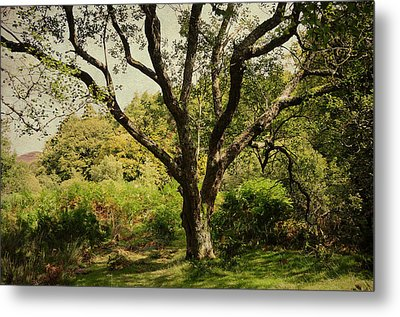 Roots Of Wisdom. Colorful Version. Wicklow Hills. Ireland  Metal Print by Jenny Rainbow