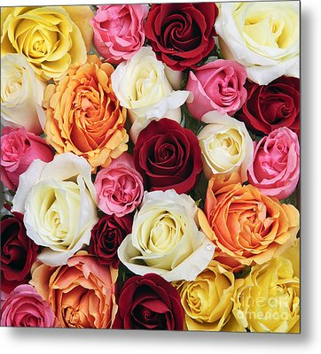 Rose Blossoms Metal Print by Elena Elisseeva