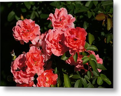 Rose Bouquet Metal Print by Bj Hodges