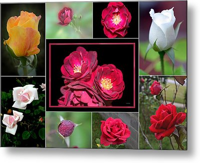 Metal Print featuring the photograph Rose Collage 001 by George Bostian