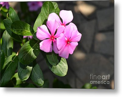 Metal Print featuring the photograph Rose Di Cristallo 2 by Kathleen Pio
