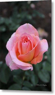 Rose Garden Metal Print by Deborah Hughes
