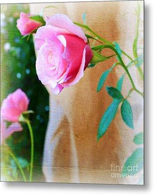 Rose In The Garden Metal Print by Patricia  Sanders