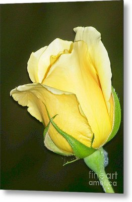 Metal Print featuring the photograph Rose Jaune by Sylvie Leandre