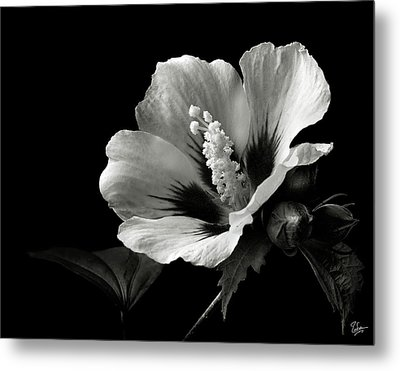 Rose Of Sharon In Black And White Metal Print by Endre Balogh