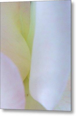 Rose Petals I Metal Print