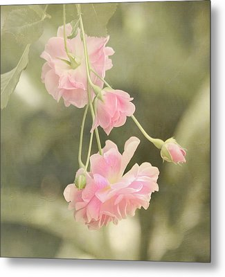Rose Vine Metal Print