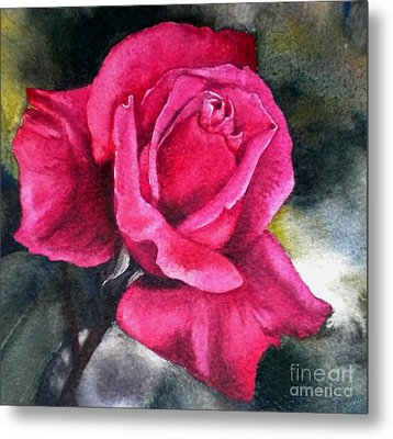 Rosenberger Rosa Family Rosaceae Metal Print by Sandra Phryce-Jones