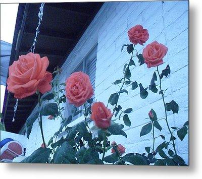 Roses By The Pool Metal Print