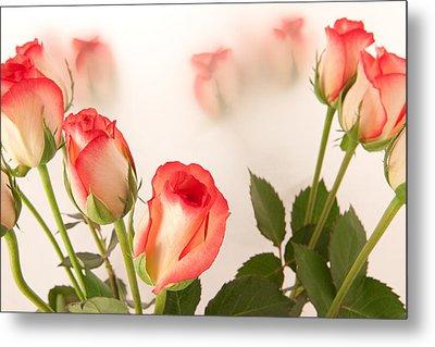 Roses Metal Print by Tom Gowanlock