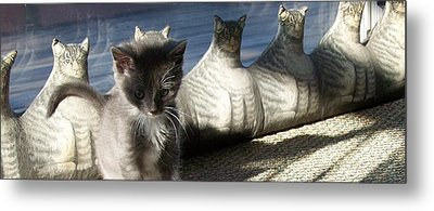 Rosie And Friends Metal Print by Barbara McGeachen