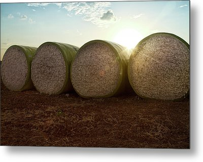 Round Bales Of Picked Cotton Metal Print