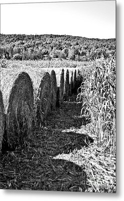 Row Metal Print by Kyra Wilson
