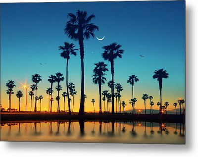 Row Of Palm Trees Metal Print by Lee Sie Photography