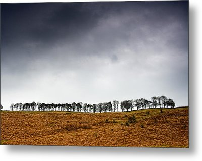 Row Of Trees In A Field, Yorkshire Metal Print by John Short