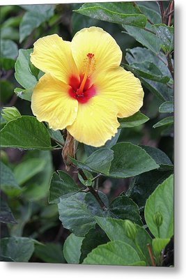 Metal Print featuring the photograph Royal Hibiscus by Craig Wood