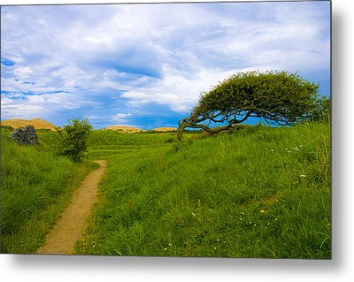 Rubjerg Path Metal Print