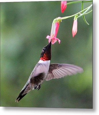 Ruby Throated Hummingbird1 Metal Print