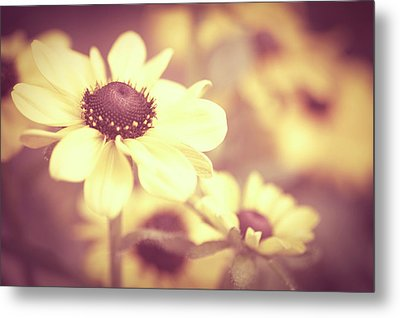 Rudbeckia Flowers Metal Print by Dhmig Photography