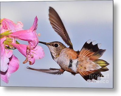 Metal Print featuring the photograph Rufous And Flowers by Jack Moskovita