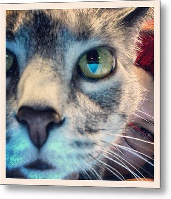 Ruger Sniffing The Camera  Metal Print