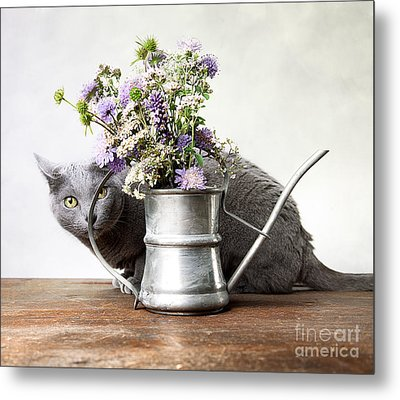 Russian Blue 03 Metal Print by Nailia Schwarz