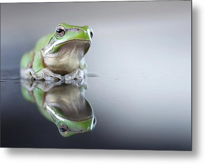 Sad Green Frog Metal Print by Darren Iz Photography