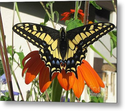 Metal Print featuring the photograph Safe by Tina Marie