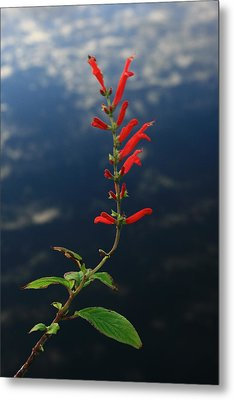 Sage Above Necanicum River Metal Print