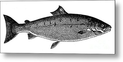 Salmon Metal Print by Granger