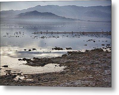 Salton Sea Birds Metal Print