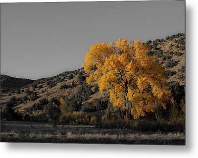Salto's Tree Metal Print
