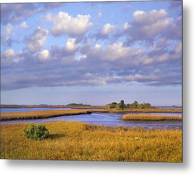 Saltwater Marshes At Cedar Key Florida Metal Print by Tim Fitzharris