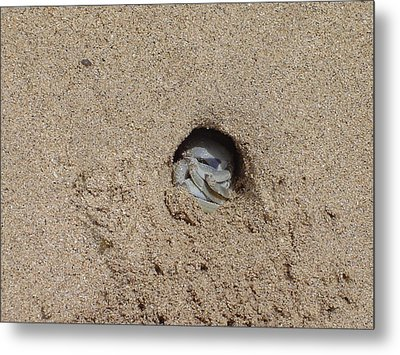 Sand Crab Metal Print by Pat Archer