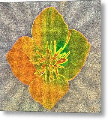 Sand Flower Metal Print by Mitch Shindelbower