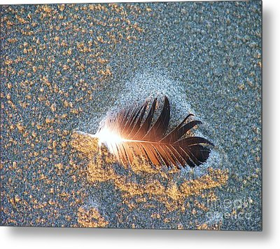 Metal Print featuring the photograph Sand Sculptured Feather  by Michele Penner