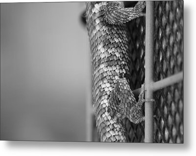 Scale And Grid Metal Print